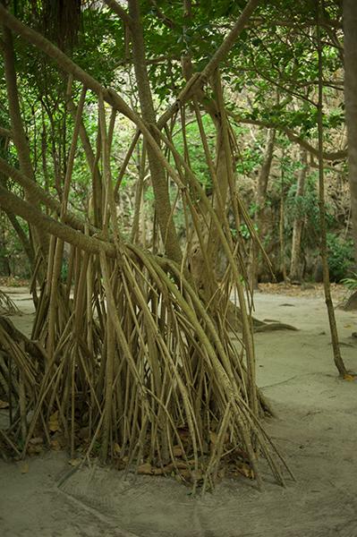 Tajska roślinność to przede wszystkim nasycone zielenie przetykane błękitem nieba i wody. Wyspiarski krajobraz Ko Phi Phi jest lazurowym snem, na żółtych łąkach Phang Nga harcują dusze słoni.