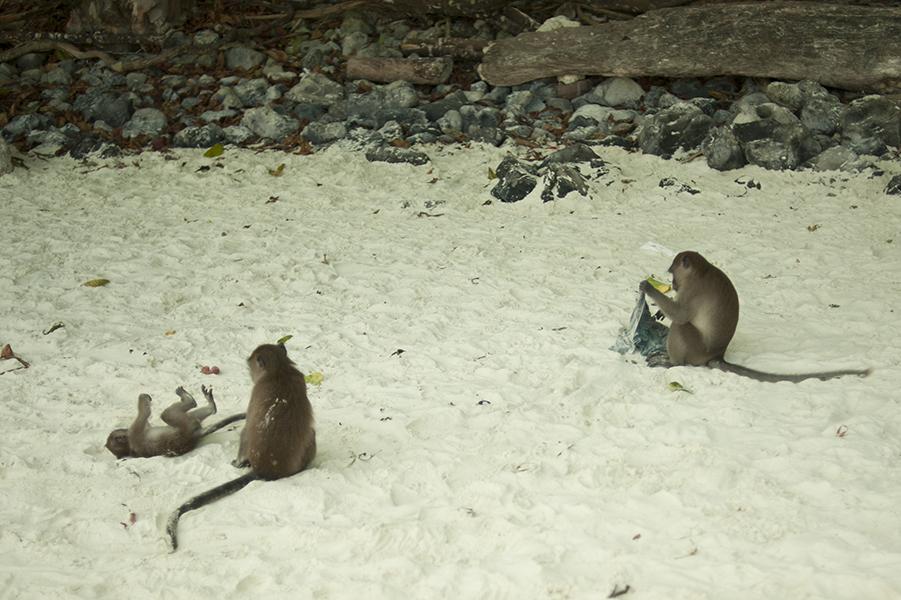 Nie dajcie się zwieść uroczej, rodzinnej zabawie, małpki to prawdziwi geniusze zła.